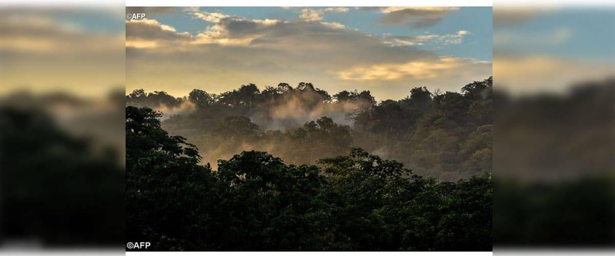Dia da Criação: Em defesa do ambiente e dos pobres
